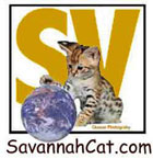 Savannahcat.com